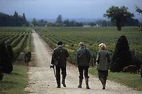 Europe/France/Aquitaine/Gironde/Pomerol : Retour de la chasse