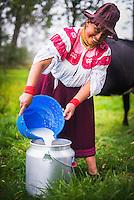 Portrait of Cayambe Lady in Ecuador, emptying freshly milked milk into a vat, Zuleta Farm, Imbabura, Ecuador, South America