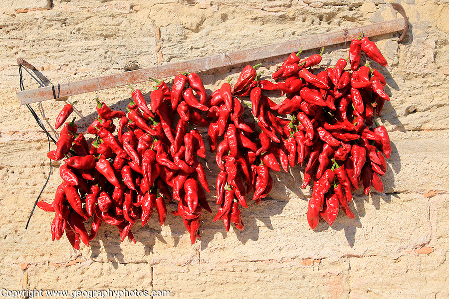 Red chilli peppers drying in the sun, Vejer de la Frontera, Cadiz Province, Spain