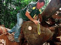 """Fiscais do Ibama medem v·rias das toras de mogno encontradas escondidas no meio da floresta em operaÁ""""o desencadeada a mais de uma semana no oeste do Par·.<br /> Nos ˙ltimos 5 dias, os fiscais apreenderam mais de 9 mil m3 de mogno. Considerada a maior apreenÁ""""o atÈ hoje na AmazÙnia. A operaÁ""""o, com custo de cerca de R$800.000,00 teve apoio do Greenpeace.<br /> Uruar·, Par· , Brasil.<br /> ©Foto Paulo Santos/Interfoto<br /> 30/10/2001"""