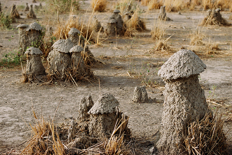 Mud termite mounds near Djenne, Mali. Material World Project.