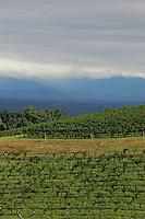 Vineyards in Charlottesville, Va. Credit Image: © Andrew Shurtleff
