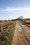 Quiet country lane Sutton, Suffolk, England, UK