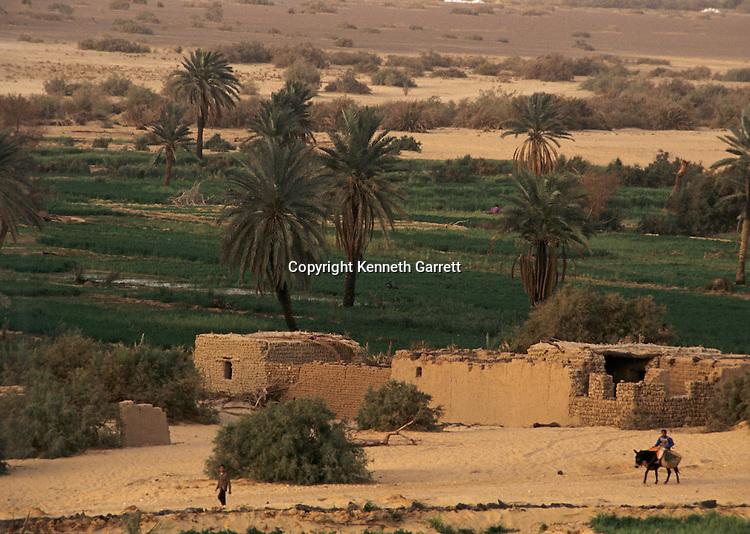 Modern farm in El Bawati, capital of Bahariya Oasis; Egypt;near ancient capital of El Qasr, Archaeology; Greco-Roman;Golden Mummies; Valley of the Golden Mummies; Book originals; mummies