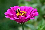 018  St Barnabas Flowers