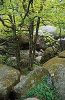 Europe/France/Midi-Pyrénées/81/Tarn/Env de Lacaune: Massif du Sidobre (650 mètres) - Environs du rocher Tremblant de Sept Faux de la Rouquette