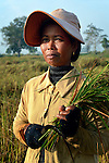On Vanna pauses as she harvests rice in the village of Dong in northern Cambodia. Life With Dignity, a member of the ACT Alliance, is working with people in this village to improve their food security.