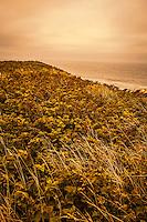 Grasses of the Sea