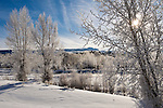 Frost dusts the cottonwoods and willows along the Gros Ventre River on a cold winter morning in Grand Teton National Park, Wyoming.