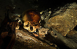 An ancient mayan skull resting on the bottom of a cenote once used by the Maya for ritual offering. It is common to find pottery and charred wood in cenotes as evidence of ritual usage.