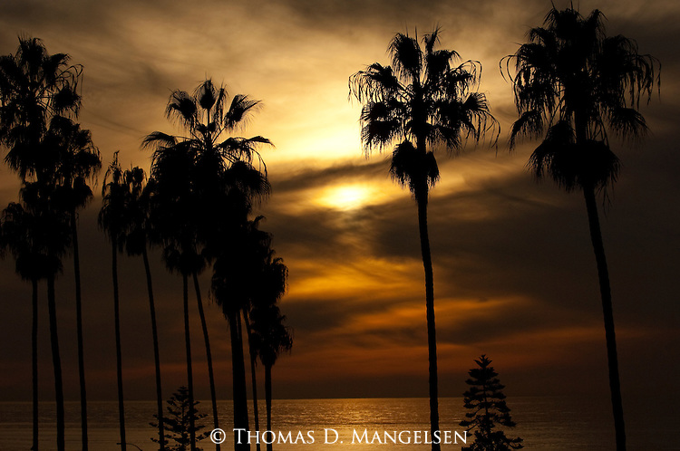 Palm trees silhouetted at sunset in La Jolla, California.