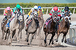 HALLANDALE BEACH, FL - JAN 27:Tommy Macho #8 with Luis Saez in the irons for trainer Todd A. Pletcher leads the field at the final turn of the $175,000 Fred W. Hooper Stakes (G3) at Gulfstream Park on January 27, 2018 in Hallandale Beach, Florida. (Photo by Bob Aaron/Eclipse Sportswire/Getty Images)