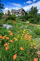 France, Hautes-Alpes (05), Villar-d'Arène, jardin alpin du Lautaret, vu depuis la zone des plantes d'Asie centrale avec pavots d'Arménie (Papaver lateritium), derrière, le chalet Mirande