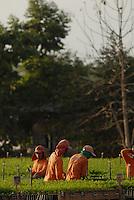 Produção de mudas de Paricá.Área de manejo sustentável para exploração madeireira da Cikel.Paragominas, Pará, BrasilFoto Paulo Santos17/11/2008