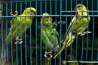 Three green parakeets in a cage for sale at a market, Kowloon, Hong Kong, China.