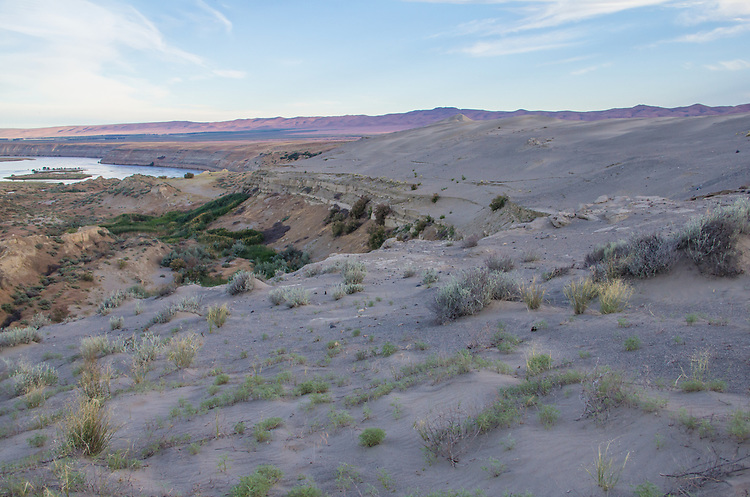 Hanford Reach National Monument, White Bluffs, Wahluke Slope, Columbia River, sand dunes, Columbia Basin, eastern Washington, Washington State, Pacific Northwest, USA, North America,
