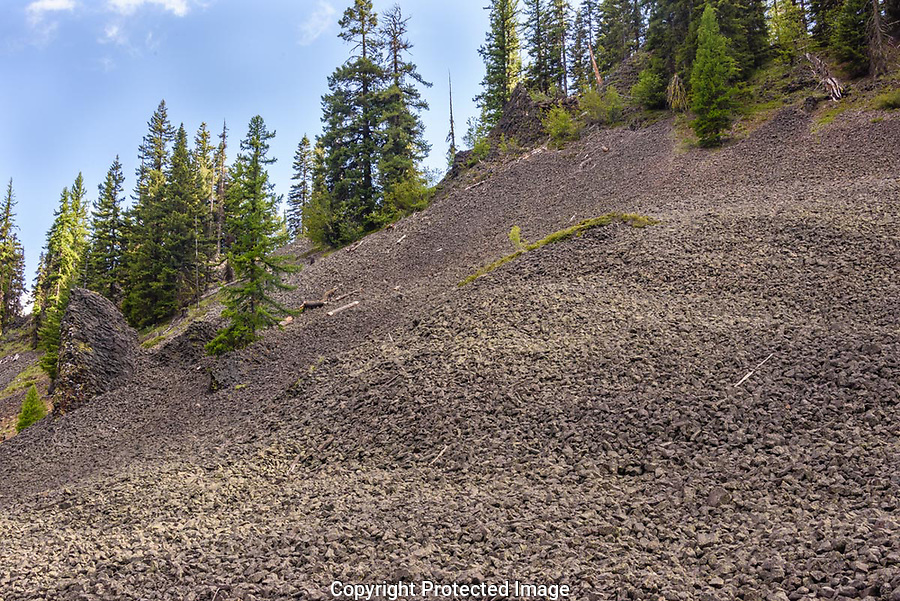 The hillside was covered with small basalt lava rocks in the Manastash Ridge area of Wenatchee National Forest.