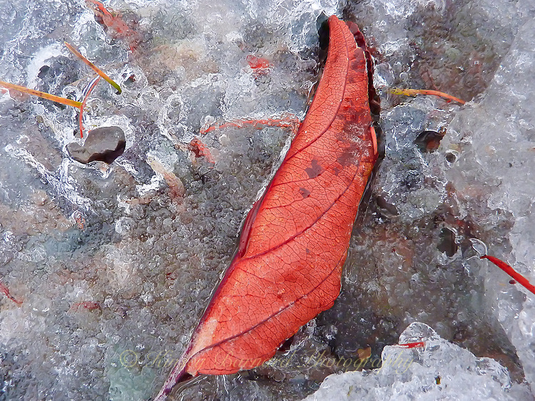 """AUTUMN LEAF""<br />