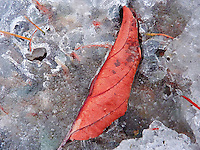 &quot;AUTUMN LEAF&quot;<br /> <br /> Leaf trapped in ice.