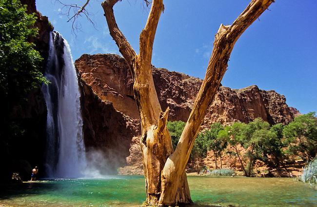 Havasupai Canyon with the waterfall a tree and pool, Arizona, USA