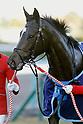 Horse Racing : Hanshin Juvenile Fillies 2016