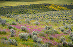 Carrizo Plain National Monument, California:<br /> Communities of sage, grasses, golden fields and owls clover among the rolling hills of the Carrizo Plain valley