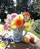 Interlitho, FLOWERS, BLUMEN, FLORES, photos+++++,gerbera,peachs,KL16424,#f#