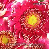 Gisela, FLOWERS, BLUMEN, FLORES, photos+++++,DTGK2003,#f#