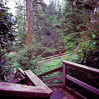 Middle Aged Hiker hiking on Boardwalk Trail along Pacific West Coast of Vancouver Island, near Ucluelet, BC, British Columbia, Canada (Model Released)