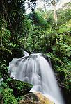 Waterfall, Bwindi Impenetrable National Park, Uganda