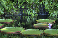 Big Lily Pads, HDR Image, Fairchild Tropical Botanic Gardens, 3D Lily Pads, Miami<br />
