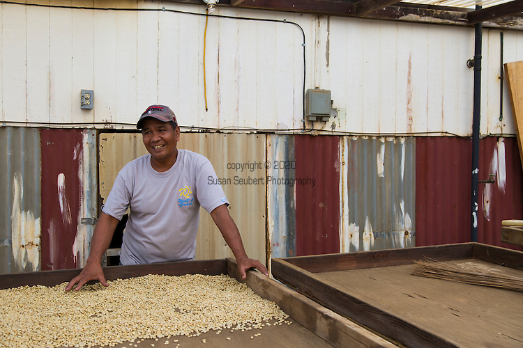 Willie Tabios, the owner of The Rising Sun coffee, at his home with his drying coffee beans in the village of Na'alehu in the district of Ka'u on the Big Island of Hawaii, USA, America