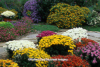 63821-12810 Fall Garden - Chrysanthemums, stone path, Diascias, Melampodium and New England Asters  Marion Co.  IL