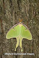04000-002.07 Luna Moth (Actias luna) Marion Co. IL