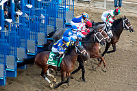OZONE PARK, NEW YORK - FEB 03: The start of the Withers Stakes for 3 year olds, Aqueduct Racetrack, on February 3, 2018 in Ozone Park, New York. ( Photo by Dan Heary/Eclipse Sportswire/Getty Images)
