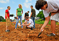 Nathan Daniel (foreground) digs holes, while (l to r) J.D. Taylor, Leah Smith, and Dicky Bromley plant squash plants in the holes and Devin Miller (background) waters the plants.  Fauquier High School FFA members planted squash and watermelon planted Monday at the Fauquier Education Farm (formerly the  Faquier Community Farm) on Meetze Rd. in Warrenton, VA.