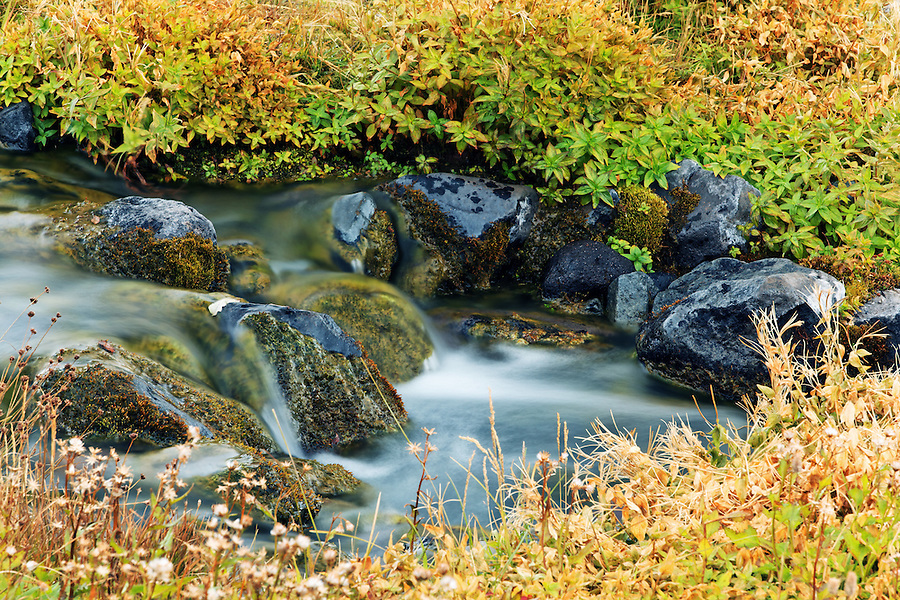 Small stream (Paradise River) flowing through alpine meadow, Mazama Ridge, Mount Rainier National Park, Washington, USA