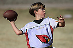 Cardinals Winter