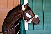 05-09-17 Always Dreaming Arrives At Pimlico