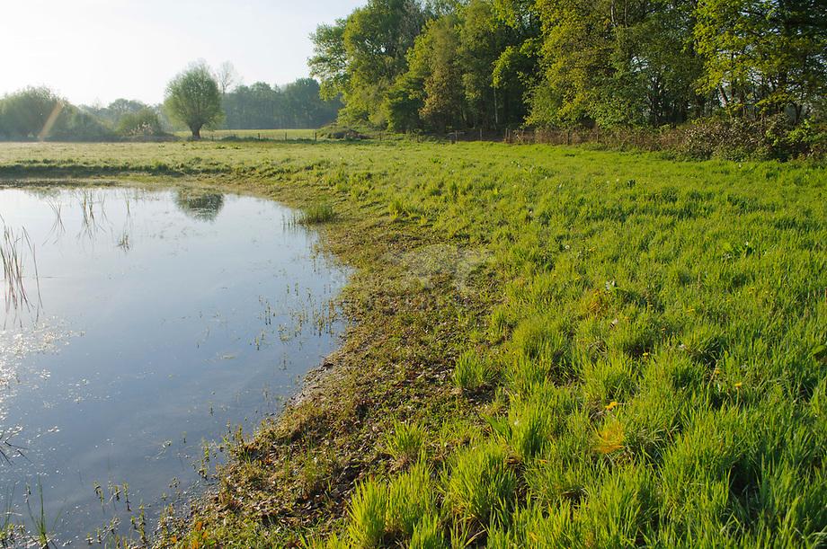 Amfibi'n poel, Sterrenbosch