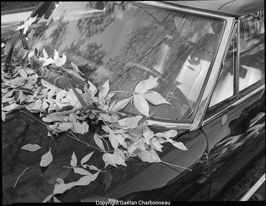 Dead leafs on a black car