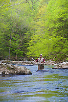 Trout Fly Fishing, Ken Lockwood Gorge, south branch of the Raritan River,New Jersey Wildlife Management Area, Piedmont Region,  Hunterdon County, New Jersey