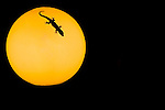 Silhouetted gecko on globe light.