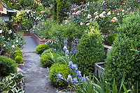 Flagstone path walkway through lush backyard California garden with Iris and roses