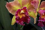 Orchid at Phipps Conservatory in Pittsburgh