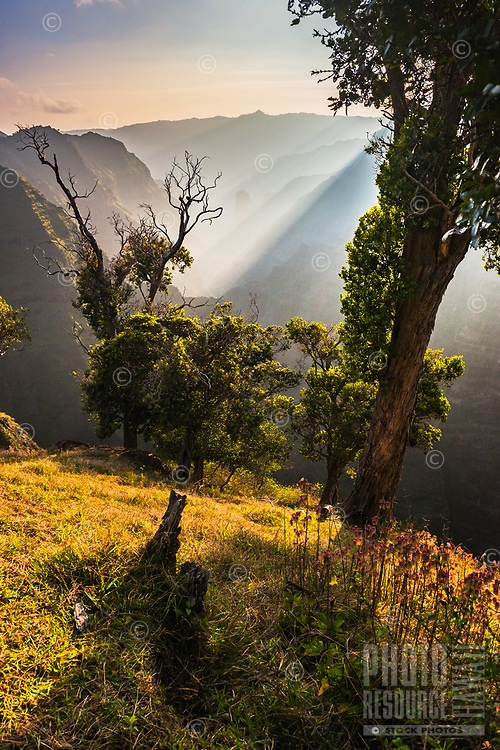 Magical afternoon light dances through the mist in Waimea Canyon on Kaua'i.