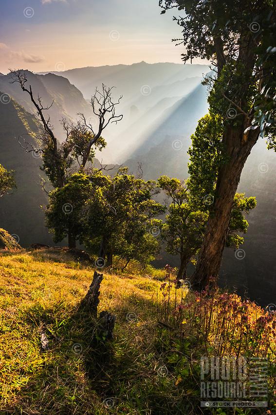 Magical afternoon light dances through the mist in Waimea Canyon on Kaua'i.