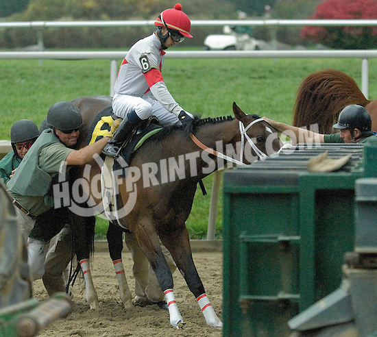 Lookin Left before winning  at Delaware Park on 10/26/10
