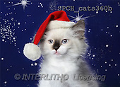 Xavier, CHRISTMAS ANIMALS, photos(SPCHcats360b,#XA#)