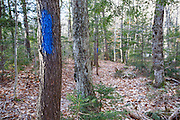 Blue trail Blazing along the Maggie's Run Trail in the White Mountains of New Hampshire.